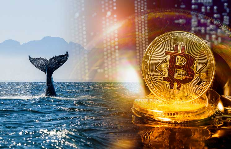 Bitcoin Whale Movement Signifies